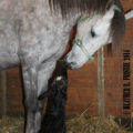 2015 Minnesota Breeders' Fund: Great Year But Changes Needed to Fuel Growth